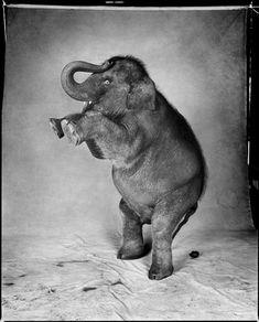 Patrick Demarchelier, Elephant, 1991