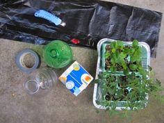 DIY Garden: Planter From A Plastic Soda Bottle!