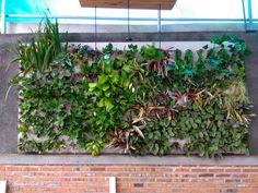 Vertical garden from tropical garden @tropicalgardenn