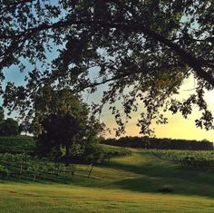 What a fantastic view at Arrington Vineyard! This would make a great location for a romantic evening wedding! We're in love with the scenery! Click the image for more information.