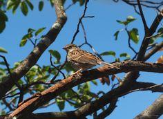 Sparrow... by Rodrigo Cornejo on 500px