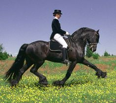 Extended trot in a meadow