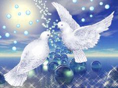 colombe symbole de la paix..