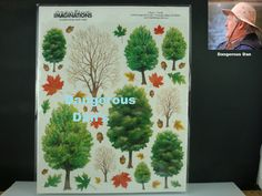 "Creative Imaginations 12/"" x 12/""  Scrapbook Paper HOLIDAY TREES CHRISTMAS"