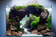 L'art du paysagisme aquatique.