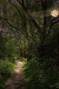bluepueblo: Moonlit Path, The Enchanted Wood photo via vic Beautiful Moon, Beautiful World, Beautiful Places, Enchanted Wood, Mystical Forest, Forest Path, Forest Trail, Walk In The Woods, Photo On Wood