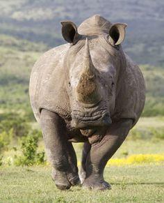 Farmers held for assaulting rhino poachers | News24
