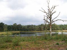 Zevenboomsven 2010