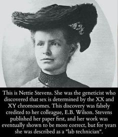 Nettie Stevens, the geneticist who discovered XX and XY. Nettie Stevens, the geneticist who discovered XX and XY. I Look To You, The More You Know, Great Women, Amazing Women, Super Women, Amazing People, Angst Quotes, Cultura General, Wtf Fun Facts