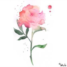 Pink Peony in watercolour by Blule