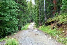 A Road In Colorado Lined With Evergreen Trees. Royalty Free Stock ...