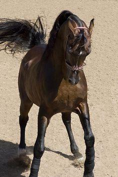 King of the Arabians