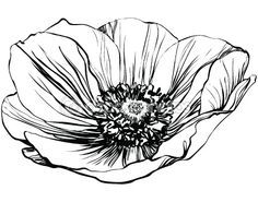 poppy outline drawing - Google Search