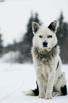 ein Hund bei Spiris. Er wirkt sehr verständig