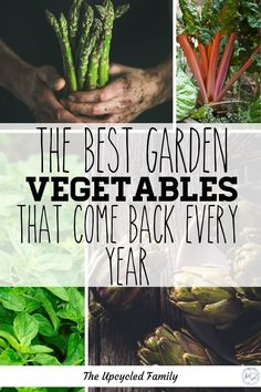 Are you new to gardening or looking for a way to maximize your garden yields without maximizing your time in the garden? Consider a perennial garden! 13 of the Best veggies (and a few herbs) to plant once and harvest for years and years to come. Perennial Vegetables, Growing Vegetables, Lush, Dubai Miracle Garden, Olive Garden, Forest Garden, Gardening For Beginners, Gardening Tips, Container Gardening