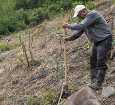 Luis, Inga Foundation's Agronomist, working hard alongside Marvin to convert his land to Inga alley cropping.