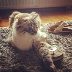 That slipper is mine, human!