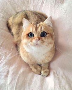 Est-ce que tu m'aimes?