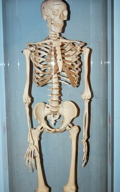 Lessons About the Human Skeleton for Grades K-2