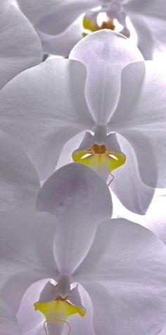 looks good :) orchid                                                                                                                                                                                 Mais