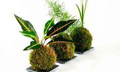 ¿Sabes qué plantas son aptas para crear kokedamas? A continuación te hacemos una selección de nuestras preferidas.