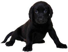 10,000+ Free Isolated & Nature Photos - Pixabay Pet Shop Online, German Shepherd Memes, Pet Shop Boys, Most Popular Dog Breeds, Best Dog Training, Training Tips, Cute Dogs Breeds, Puppy Care, Labrador Retriever Dog