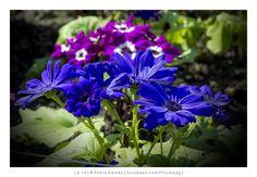 [2014 - Porto / Oporto - Portugal] #fotografias #flor #flores #flower #flowers