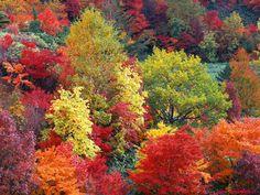 I colori dell'autunno sono splendidi, le tonalità calde che esso ci offre con le foglie che trascolorano dal verde al giallo, dall'arancione al rosso, al b