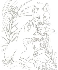 Animal Illustrations to Paint or Color Dover Publications