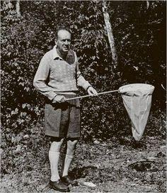 Vladimir Nabokov, chasseur de papillons
