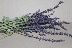 Salvia Officinalis, Dried Salvia Flowers, Dried Sage Flowers, Whole Herb, Common Sage Dried, Garden Sage Flower, Dried Sage, Dried Herb Sage by KhalaziyWoods on Etsy