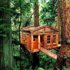 casetta sull'albero, chi non l'ha mai sognata?