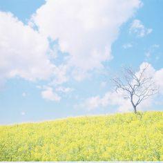 *spring | Flickr