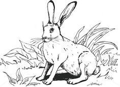 Un blog ce cuprinde planse de colorat si fise de lucru pentru copii. Acest blog vine ca un ajutor in intampinarea cadrelor didactice. Romania Map, Rabbit Colors, Unicorn Coloring Pages, Bunny Rabbit, Paper Dolls, Moose Art, Mandala, Drawings, Woodburning