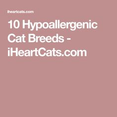 10 Hypoallergenic Cat Breeds - iHeartCats.com - Tap the link now to see all of our cool cat collections!