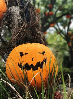 Top 5 Tips for Halloween Horror Nights Universal Orlando Universal Halloween Horror Nights, Pumpkin Carving, Universal Orlando, Survival Tips, Top, Survival Life Hacks, Crop Tee, Shirts, Blouses