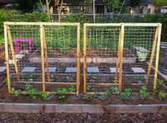 summer squash trellis   the trellises turned out so lovely pole beans will grow