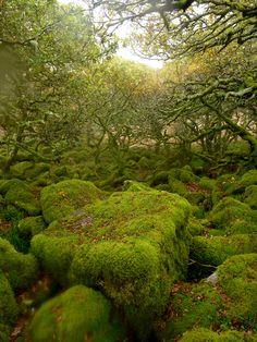 Wistman's Wood, Dartmoor National Park, Devon County, England Devon Uk, Devon England, England And Scotland, Beautiful World, Beautiful Places, Nature Verte, Dartmoor National Park, Wanderlust, Destinations