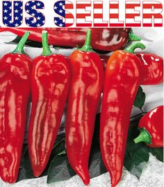 30 Organically Grown Marconi Rosso Pepper Seeds Heirloom Sweet Non GMO Giant | eBay