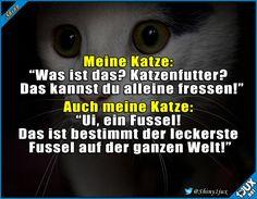 Katzen sind schon ganz speziell. #Katze #Katzen #Katzenliebe #lustig #Sprüche #Humor