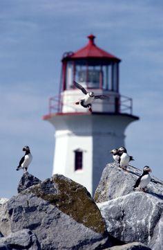 *Machias Seal Island Lighthouse - Canada