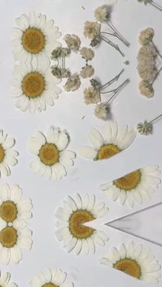 Pressed flower real flower dried flower phone case, dried flower clear case cover, iphone x 6 7 8 Plus X Xr Xs 11 Pro Max case Diy Resin Art, Diy Resin Crafts, Cute Phone Cases, Diy Phone Case, Iphone Cases, Real Flowers, Dried Flowers, Aesthetic Phone Case, Designer Purses