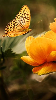 The most beautiful butterfly photos with you in this photo gallery. Butterfly is an insect. But I think, butterflies are the most beautiful insect types. Butterfly Kisses, Butterfly Flowers, Most Beautiful Butterfly, Whatsapp Wallpaper, Gods Promises, Broken Promises, Butterfly Decorations, Christian Life, Christian Living