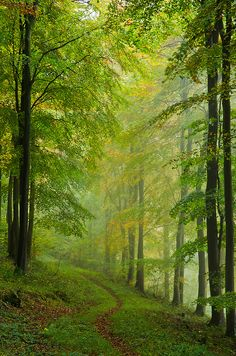 wanderthewood: Path through the beech wood, Chilgrove, Sussex, England by andrewinpompey