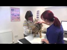 Heathside Veterinary Surgery – Southampton