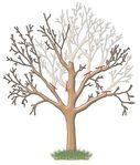 Мобильный LiveInternet Омолаживающая обрезка плодовых деревьев | МилаОК - Дневник МилаОК |