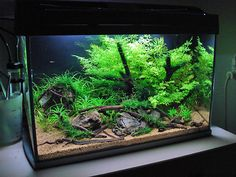 FANTASTIC step-by-step planted aquarium set up tutorial. An easy layout for every 10-15 gallon standard aquarium set.