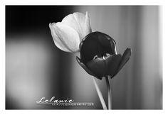 Black and White by Lelanie.deviantart.com
