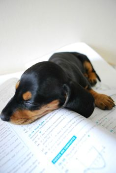 homework will have to wait: it's nap time!