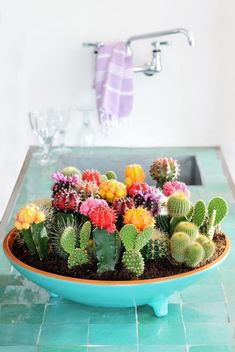 aqua bowl style planter filled with bright cacti flowers
